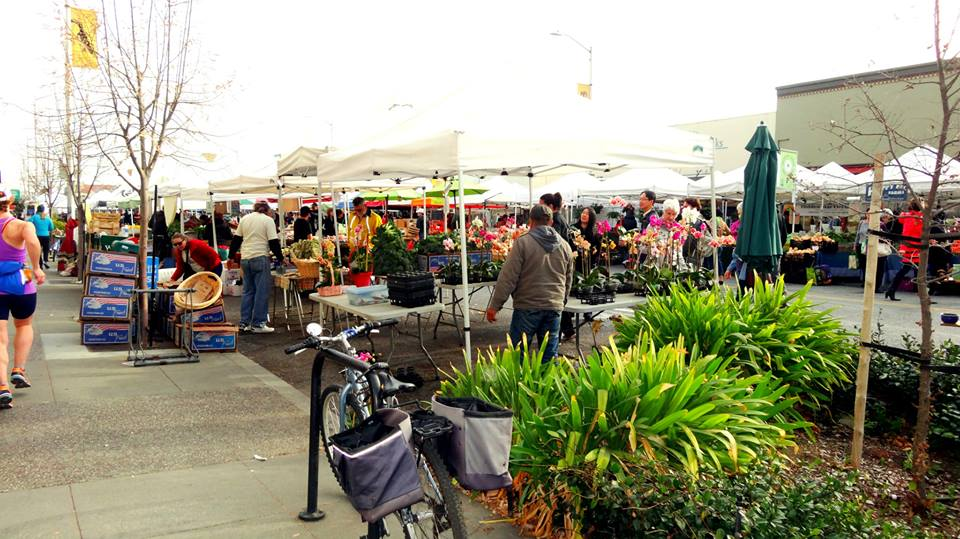Farmers' market on Jan 27. Mind. blown.