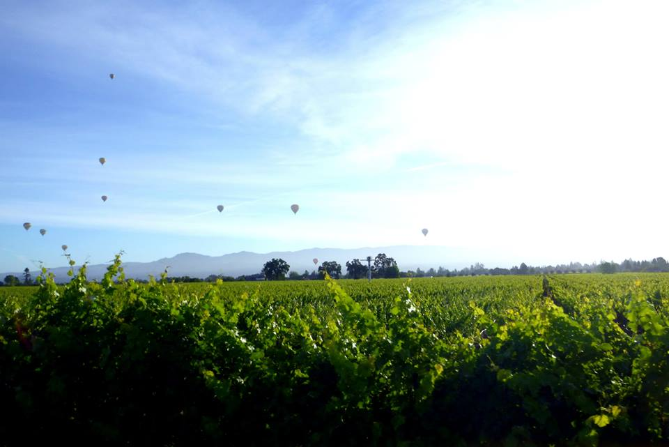 Napa on a Saturday morning! PC: Linh/RA