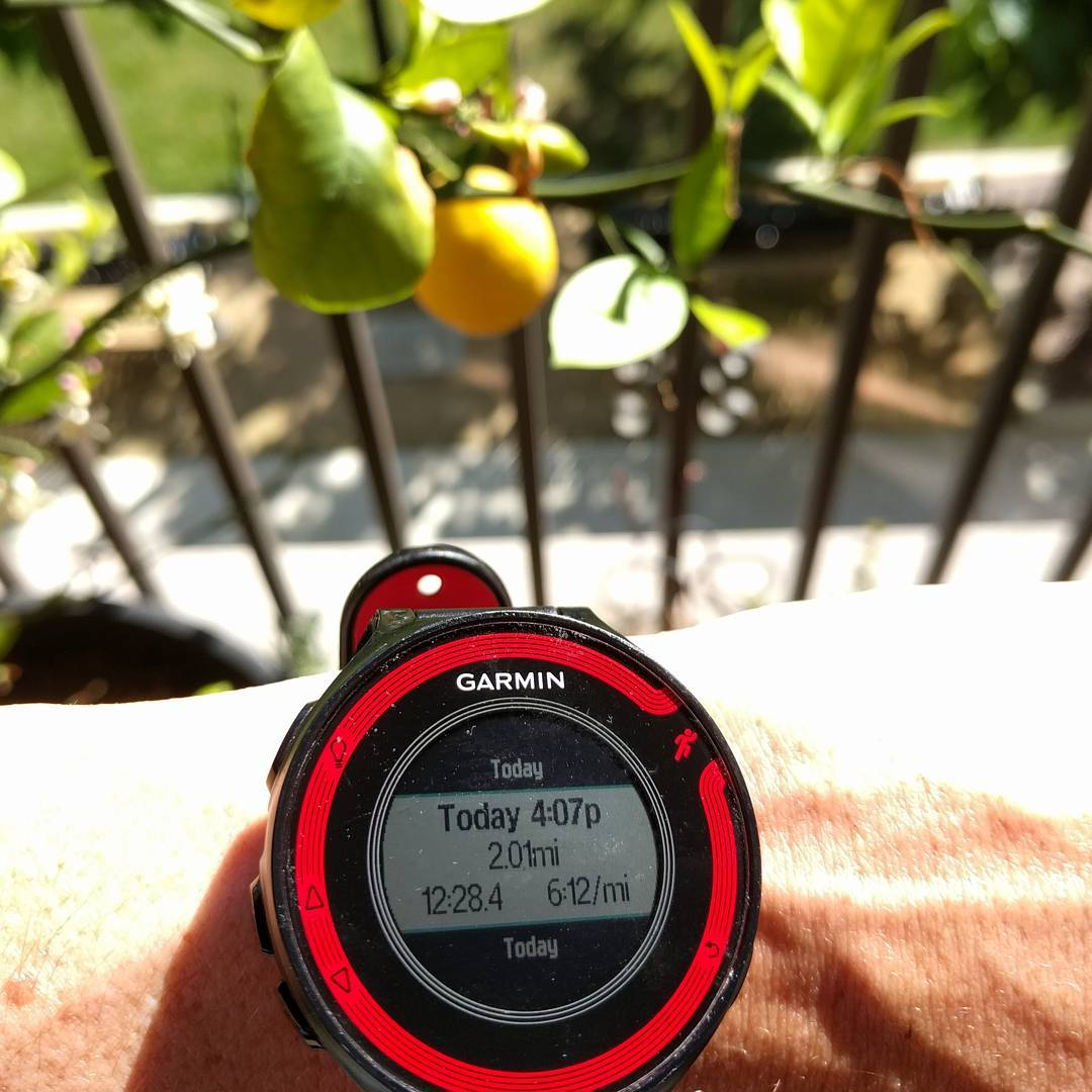 I never take pictures of my watch, but I was surprised how this run fared. (say hi to our little lemon!)